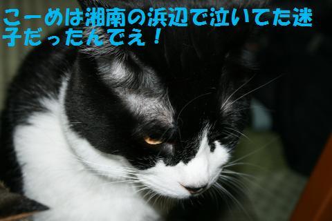 002_convert_20100814165616.jpg