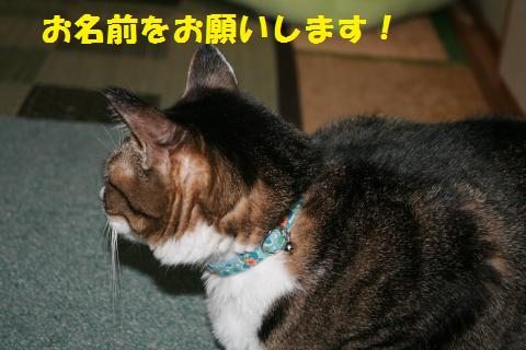 002_convert_20101024133833.jpg