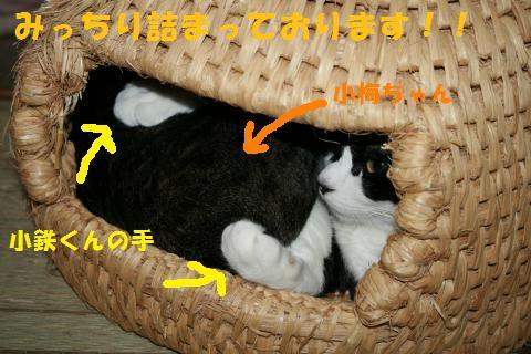 002_convert_20101030222311.jpg