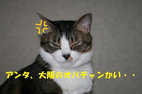 002_convert_20101103212625.jpg