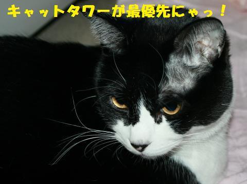 002_convert_20110113161913.jpg