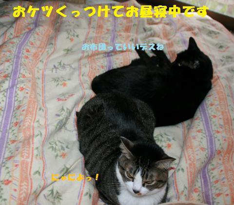 002_convert_20110410211149.jpg