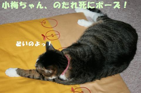 002_convert_20110608221738.jpg