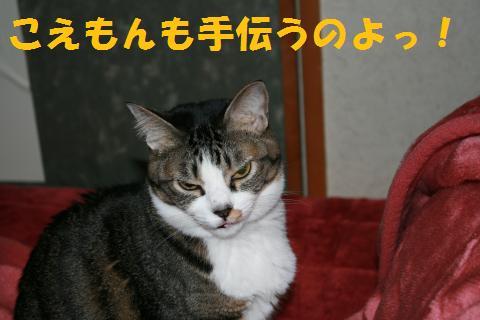 003_convert_20100211222329.jpg