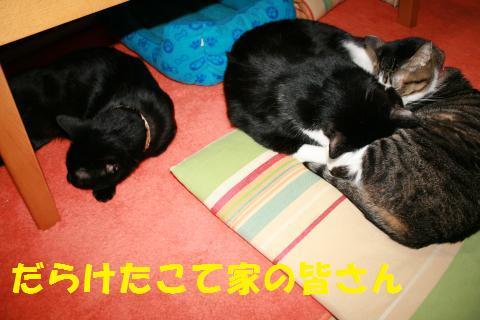 003_convert_20100225200930.jpg