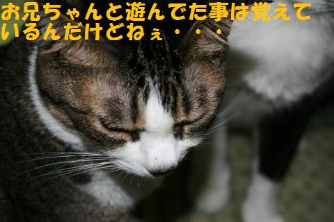 003_convert_20100814165742.jpg