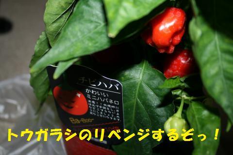 003_convert_20100903230650.jpg