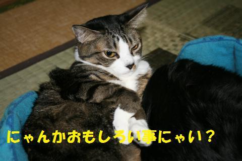 003_convert_20101016232309.jpg