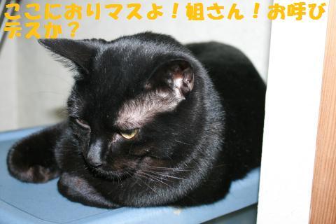 003_convert_20110109232022.jpg