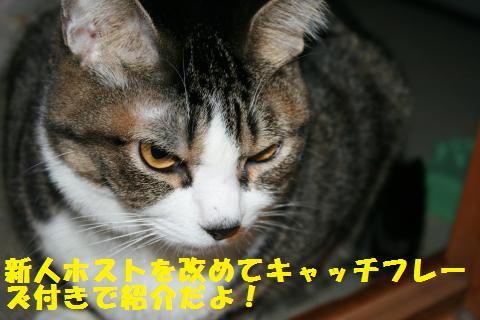 003_convert_20110214175800.jpg