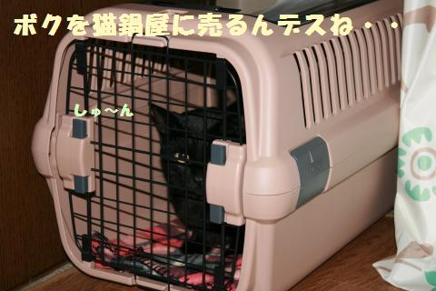 003_convert_20120212220520.jpg