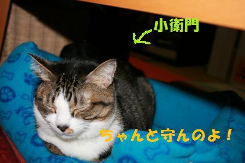 004_convert_20100129222702.jpg