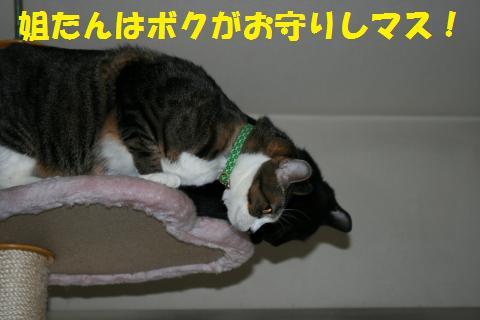 004_convert_20100131200409.jpg