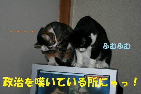 004_convert_20100403184401.jpg