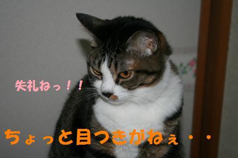 004_convert_20100410220327.jpg