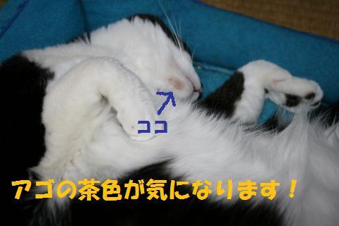 004_convert_20100524225903.jpg