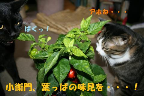004_convert_20100903230808.jpg