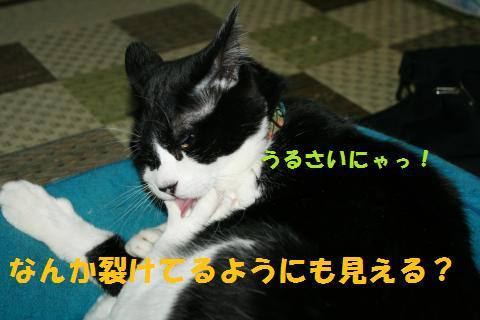 004_convert_20100908231351.jpg
