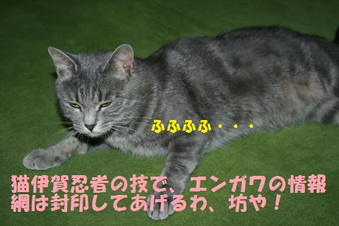004_convert_20100910225531.jpg