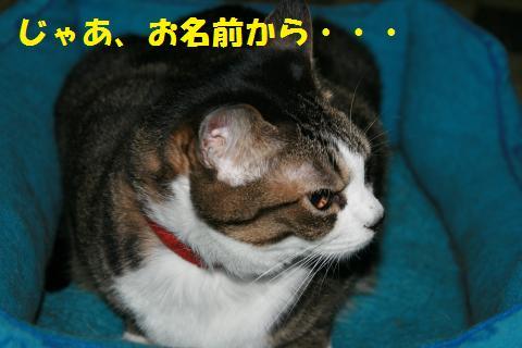 004_convert_20101028161638.jpg