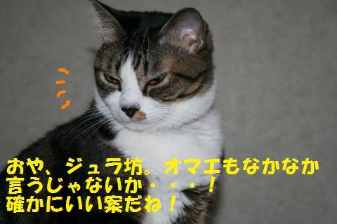 004_convert_20101103212804.jpg