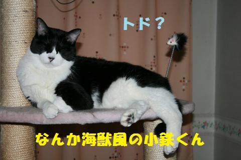 004_convert_20101229220901.jpg