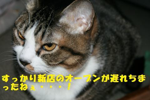 004_convert_20110214175924.jpg