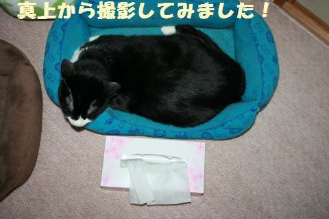 004_convert_20110605214511.jpg