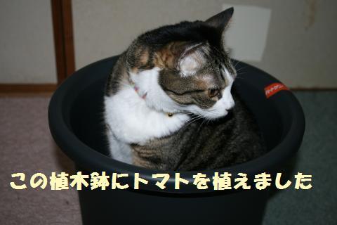 004_convert_20110620232424.jpg