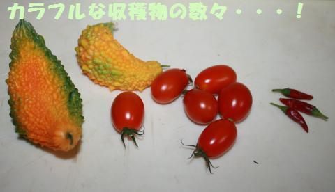 004_convert_20110915212507.jpg