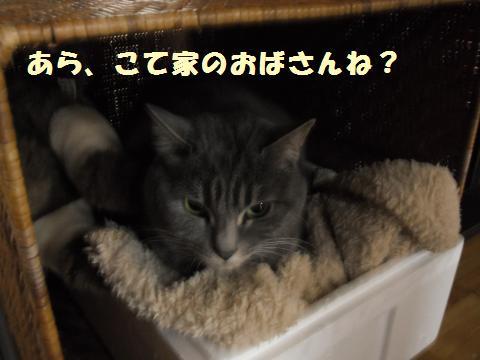 004_convert_20120131230916.jpg