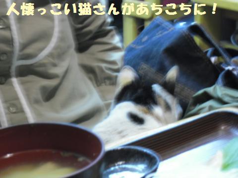 004_convert_20120219153707.jpg