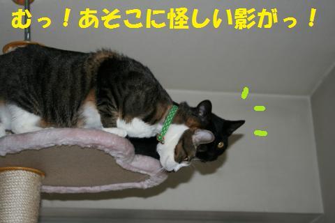 005_convert_20100131200529.jpg