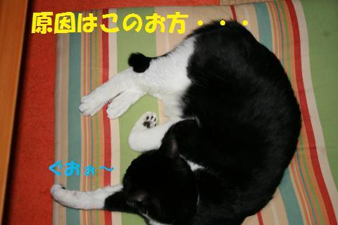 005_convert_20100417234428.jpg