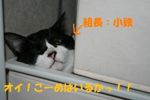 005_convert_20100705225639.jpg
