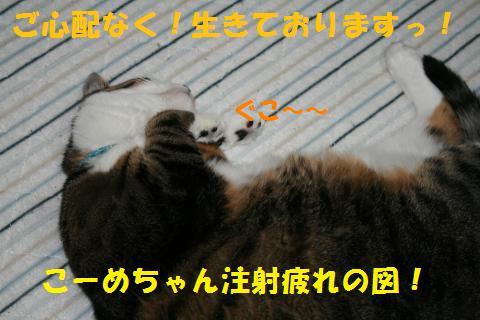 005_convert_20100802232946.jpg