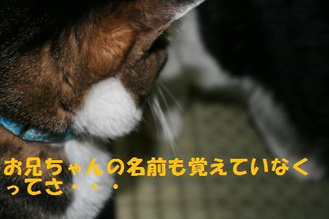 005_convert_20100814165906.jpg