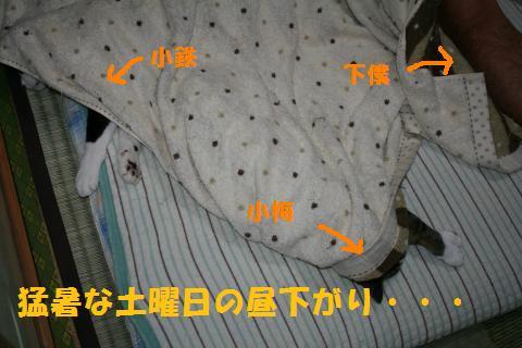 005_convert_20100911232930.jpg
