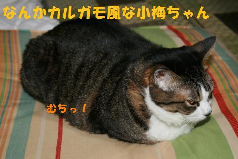 005_convert_20100917225638.jpg