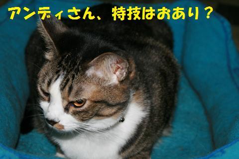 005_convert_20101028161837.jpg