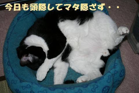 005_convert_20110824230723.jpg