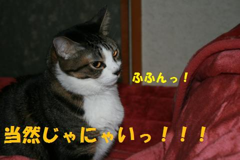 006_convert_20100211222444.jpg
