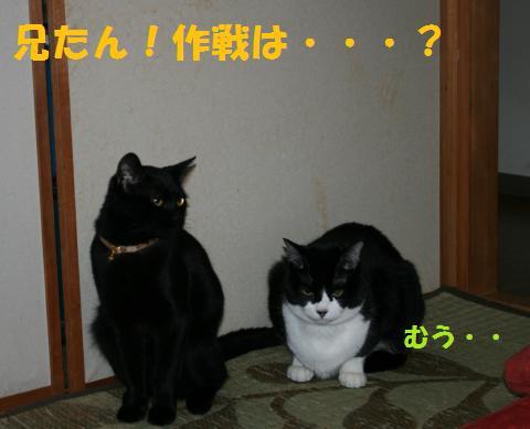 006_convert_20100225201008.jpg