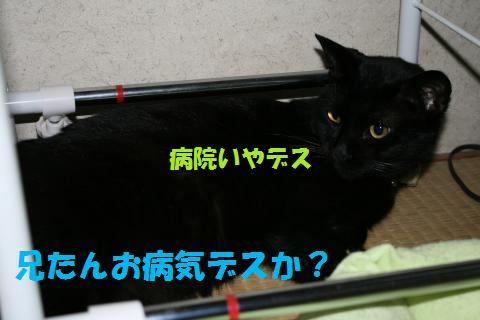 006_convert_20100524230033.jpg