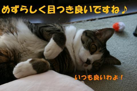 006_convert_20100603231508.jpg