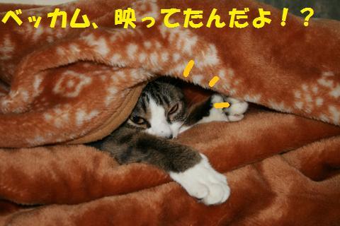 006_convert_20100620202115.jpg