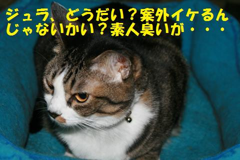006_convert_20101028164432.jpg