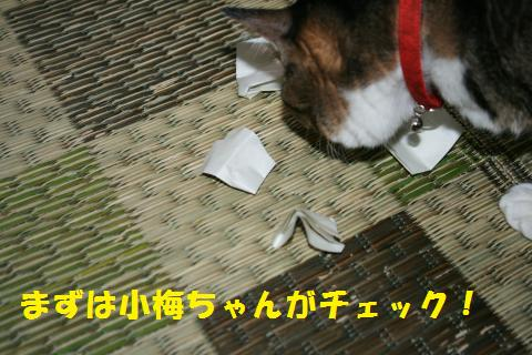 006_convert_20101110192106.jpg