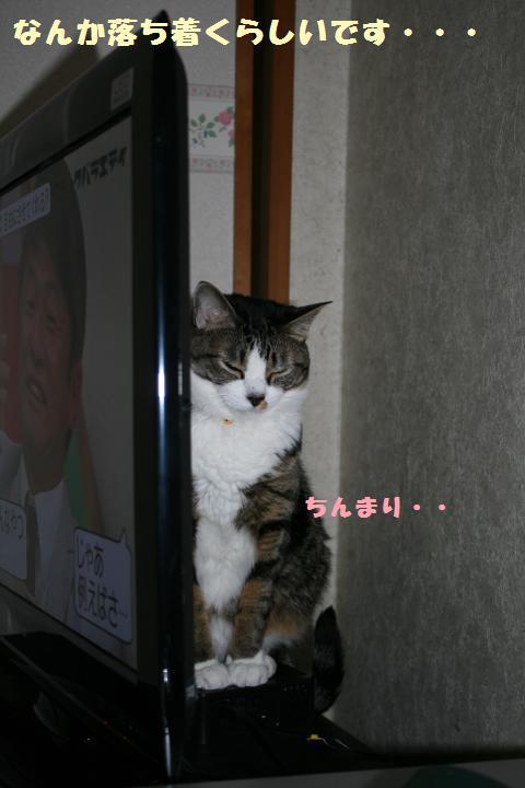 006_convert_20110615230749.jpg