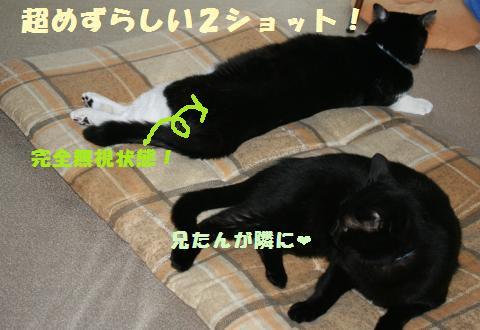 006_convert_20110804224605.jpg
